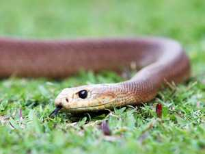 Taipan bite kills man after week in hospital