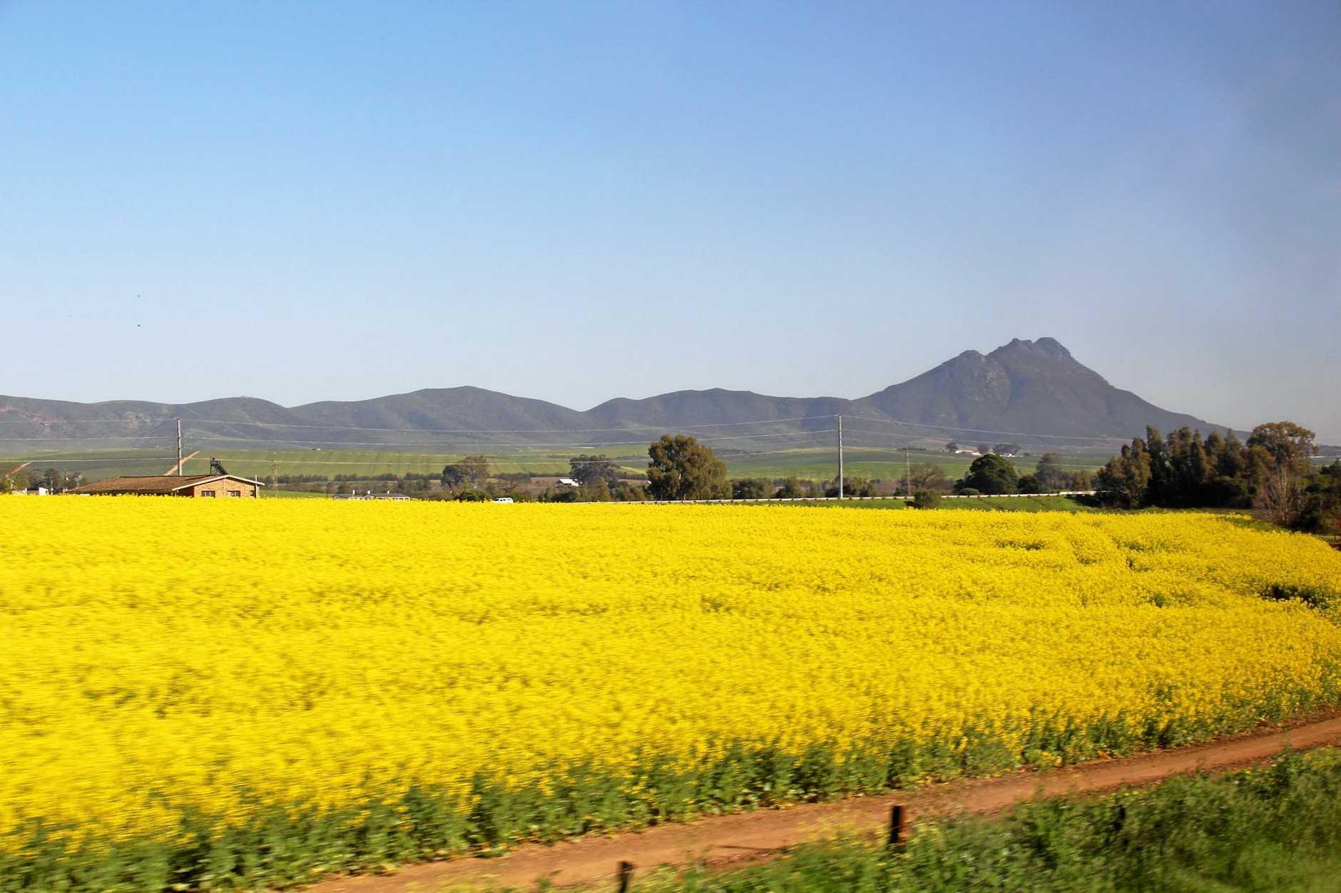 TERRIFIC VIEWS: Colourful crops.