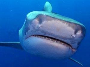 Shark passes close to popular swimming spot