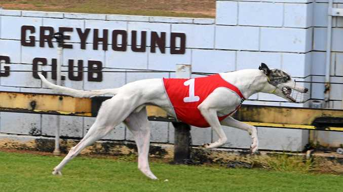 OVER THE LINE: Blizzard Blitz takes out race two at the Bundaberg Greyhound Racing Track, Thabeban Park.
