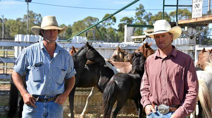 FIRST TIMERS: David and Michael Maher will take the reins of Queensland's first brumby catch.