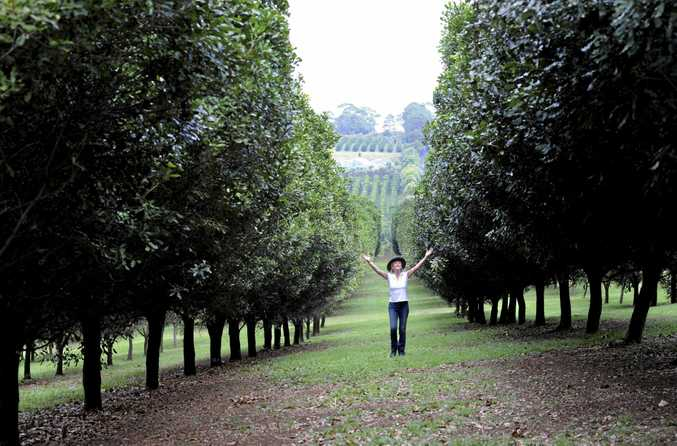 BIG YEAR: For the second year in a row Australian macadamia growers have produced a bumper record-breaking crop.