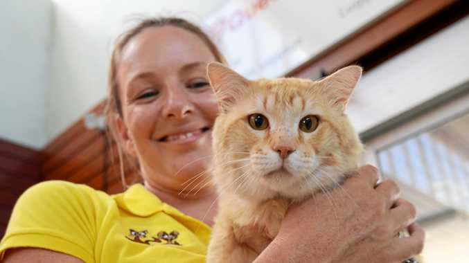 Capricorn Animal Aid cat co-ordinator Rochelle Vycke with Big Red, who caught the train from Maryborough to Rockhampton.