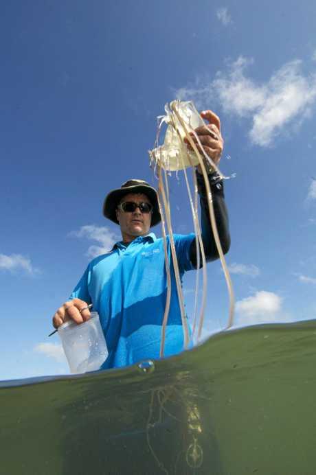 Associcate Professor Jamie Seymour handling a box jellyfish.