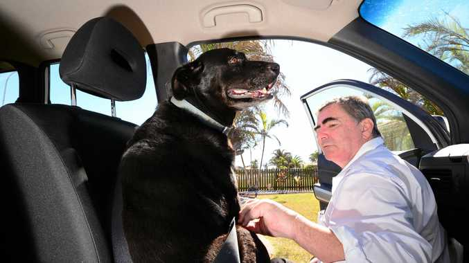 NOT ALLOWED: Legislation introduced in 2013 now prohibits pets being in the driver's area of the car for safety reasons.