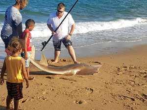 'Monster' catch at Lamberts Beach