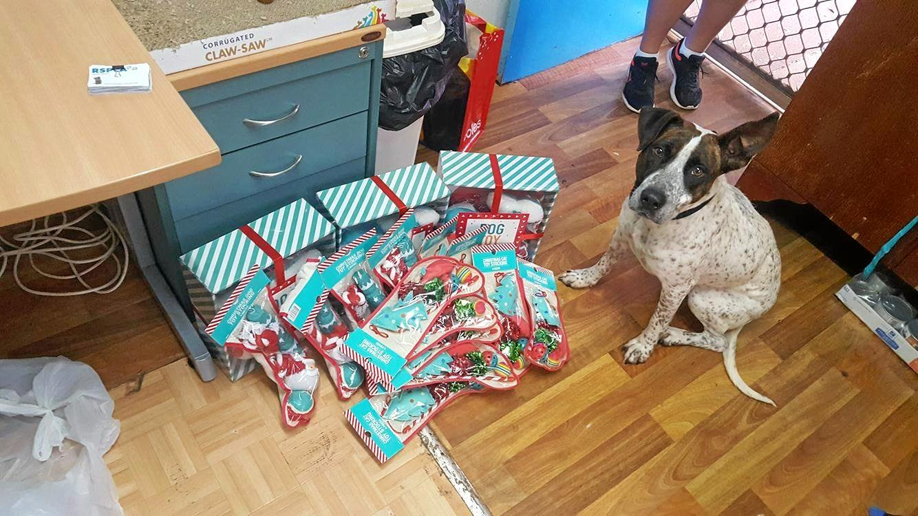 English staffy cross Mae poses with the presents.