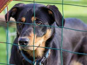 RSPCA in the dark about Mackay region dog poisoning