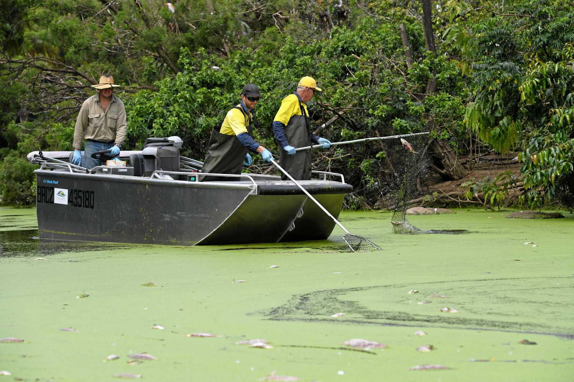 FISH KILL: Council staff remove dead fish at the botanic gardens.