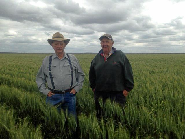John Maguire (on left) and Ian Sampson (on right) standing in wheat crop on Glenora Downs Ginide (near Emerald). Ian brought the property off John in 1979.