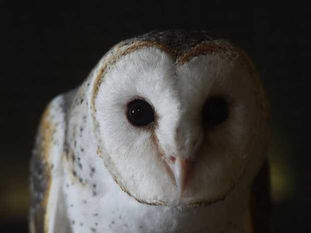 The Macadamea Castle has opened a new nocturnal exhibit with new animals to come and look at including a beautiful barn owl.