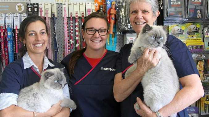 FIGHTING RABIES: Dr Abbie McEwen and her Lismore Central Vet Clinic colleagues veterinary nurses Jessica Lock and Kay Doust, hold Himalayan felines Rupert and Elsie.