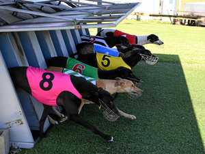 Greyhounds start new year with new format
