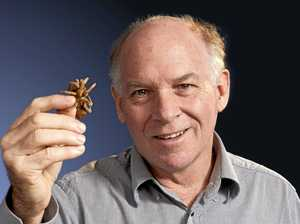 Gladstone's most common spiders revealed: expert