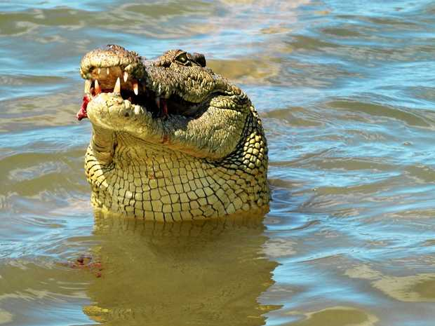 Claims a crocodile has been seen in a Coolum creek have brought back memories for one reader.