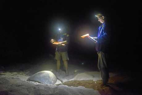 ON THE RECORD: Turtle monitors note their observations on Wreck Island.