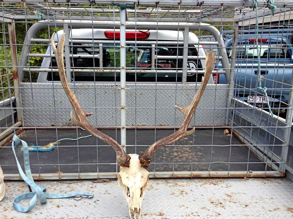 The skull of a buck shot and left at Paul Bateman's property.