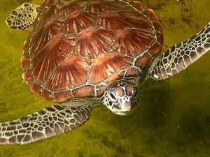 Turtle secrets uncovered