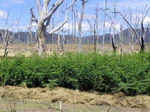 Weed infestation closes Prossie dam