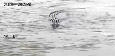 Crocodile at Fitzroy Barrage captured on CCTV footage posted on the Rockhampton Regional Council's Facebook page.
