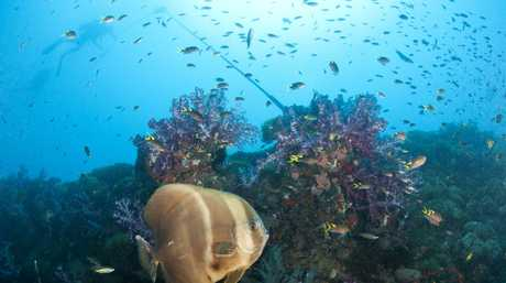 The wreck of the SS Yongala, off Ayr in north Queensland, is known for its abundance and concentration of fish life.