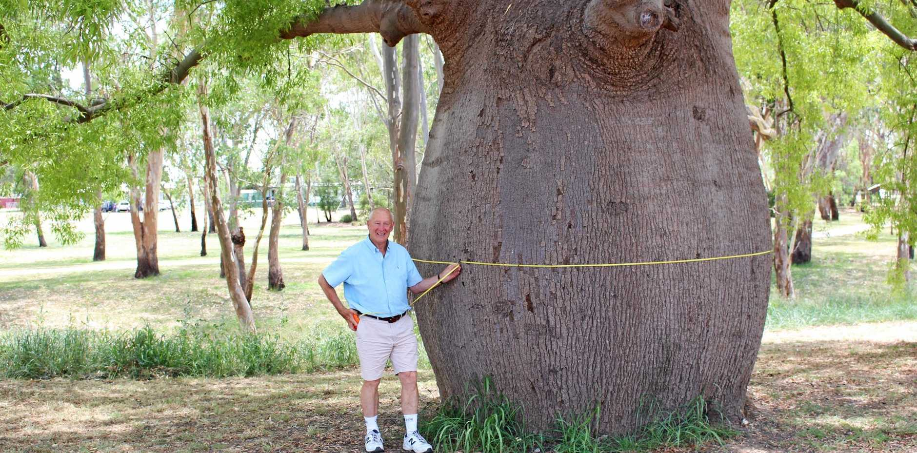 MEASURING UP: Derek McIntosh, who is with the National Register of Big Trees, admires Roma's biggest bottle tree.
