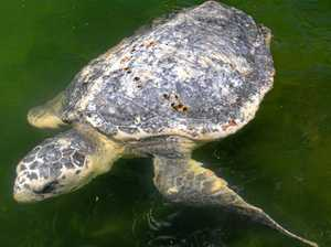 On a rescue mission to save seabirds and turtles