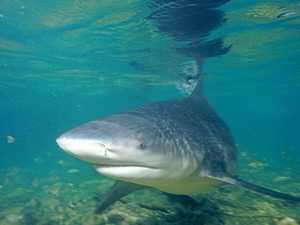 Man bitten by shark, taken to hospital