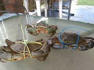 CRACKDOWN: Plan to put three-month ban on crabbing
