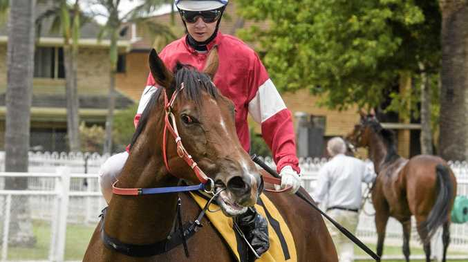 CROWD FAVOURITE: Flying filly Charlee Bear made a strong return to the track yesterday.