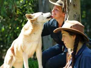 World's oldest captive dingo dies at the Rockhampton Zoo