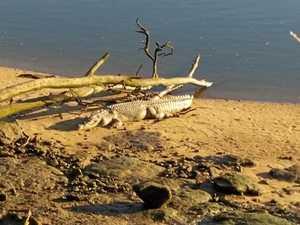 WATCH: Croc filmed frolicking in Fitzroy River