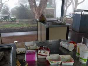 Grubs leave popular Toowoomba park disgusting mess