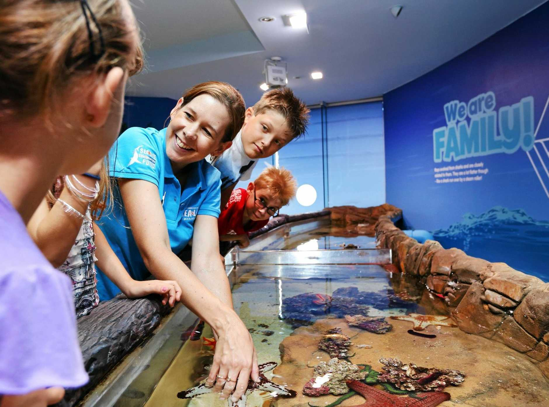 WHAT LIES UNDER THE SEA: SEA LIFE Sunshine Coast is hosting the Ocean Ranger program these holidays.
