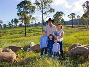 Fresh piggy shop about to pop up in Gympie