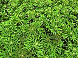 Medical marijuana veto beggars belief