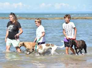 Greyhounds in need of homes on the Fraser Coast