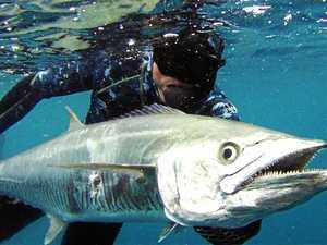 Column returns in time for spearfishing season