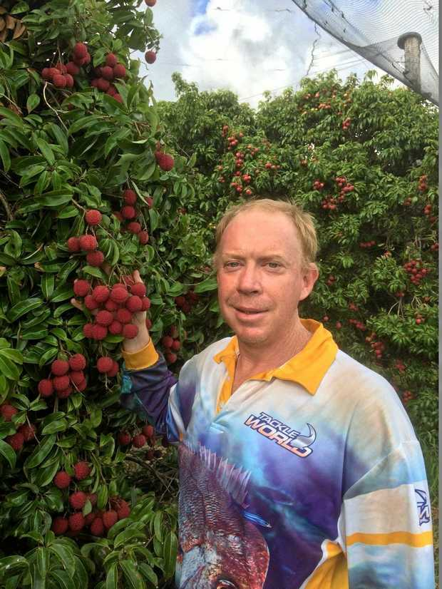 SWEET TREAT: Yeppoon Lychees owner Graham Welch with some of his delicious crop.