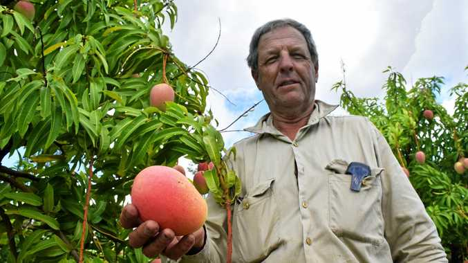 SILKY SWEET: Derek Foley with the mango variety he developed by accident.