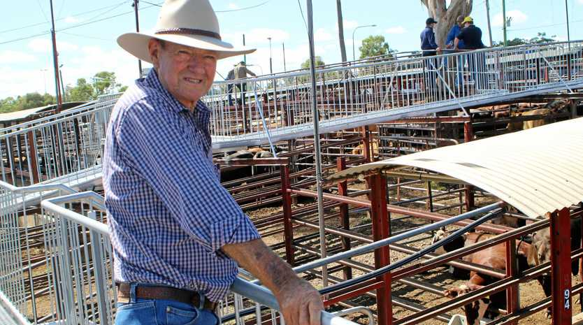 FAMILY LEGACY: Third generation cattle farmer Allan Erhardt watching Tuesday's auction unfold at the Warwick Saleyards.