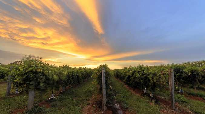 BEAUTIFUL: Sunset in Cudgen over passionfruit vines.