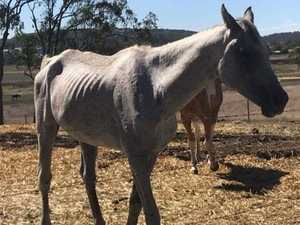Residents fear horses in paddock will starve to death