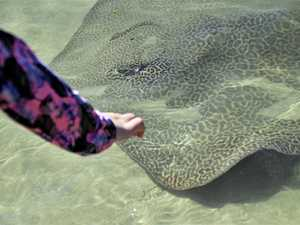 Search for mystery stingray whisperer