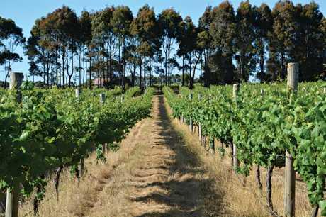 Vineyards in the Margaret River region in Western Australia.