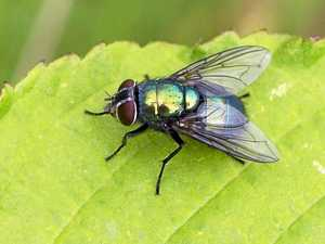 Have you noticed an increase in flies lately?