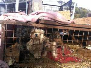 Puppy farm alarm