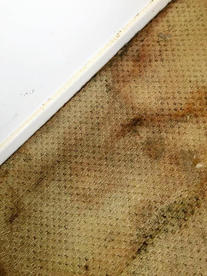 Urine stains on carpet.