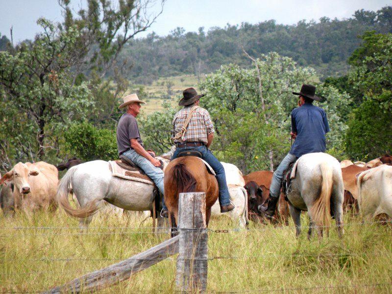 Frank, Rick and Jamie Bowman ride horses on Lorna Vale