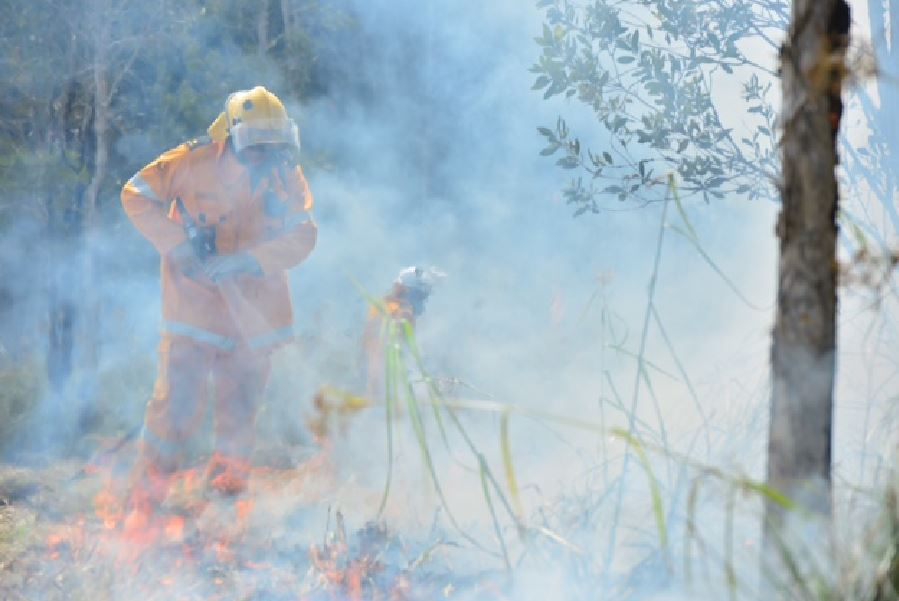 Firefighters conduct backburning as they attempt to contain a large bushfire at Coolum.